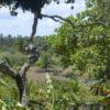 Ein Blick in die Zukunft der Tropenwälder