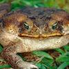 Warnung vor Ausbreitung gebietsfremder und invasiver Arten