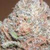 Entdecken Sie das Bublblegum CBD-Cannabis