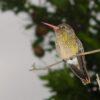 "Projekt ""Costa Rica + Natura"" vorgestellt"