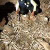 Peru: Terrororganisation tötet zwei Männer