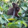Genetische Monogamie: Treue Paare im Regenwald