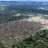 Brasilien: Bolsonaros Politik ist Gift für den Amazonas