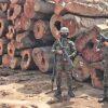Europäische Union – Honduras: Abkommen zur Reduzierung des illegalen Holzeinschlags