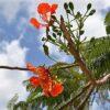 Flora: Mehr als 25.000 endemische Arten in Brasilien
