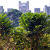 Brasilien: Kaffeeernte beginnt im Herzen von São Paulo
