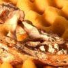 Neue Krokodilart in Brasilien katalogisiert