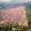 Abholzung im brasilianischen Amazonasgebiet steigt weiter