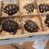 São Paulo: Fracht mit 1.000 Schildkröten abgefangen