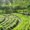 Eine Vision für Kohlenstoffarme Landwirtschaft und Umweltschutz