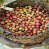 Brasiliens Kaffeeexporte gehen stark zurück
