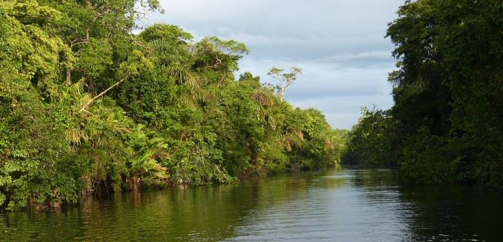 regenwald-costa-rica