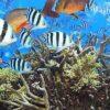 Größtes menschengemachte Artensterben der Erdgeschichte